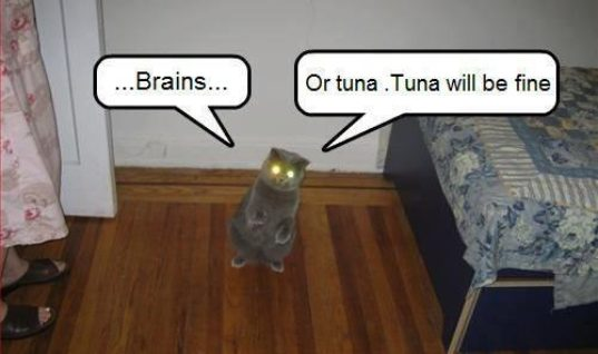 Brains or Tuna?