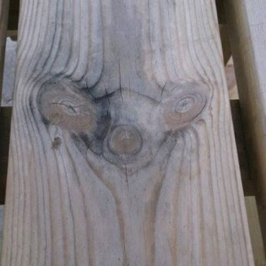 Natural carving in a tree log