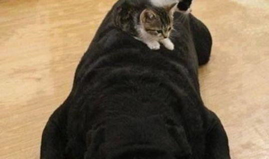 Cat and Dogs are friends