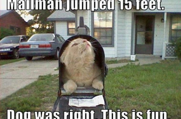 Cat in the mailbox