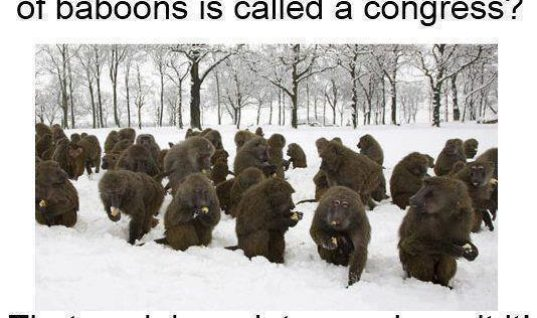 Congress of Baboons