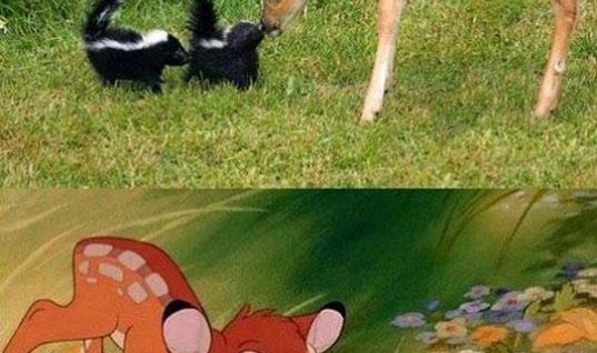 Disney in real life