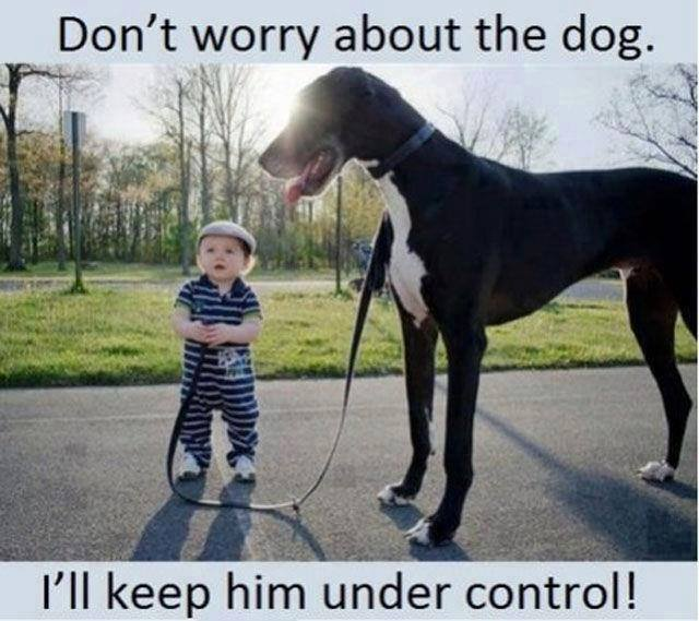 [Image: Dont-worry-about-the-dog.jpg]