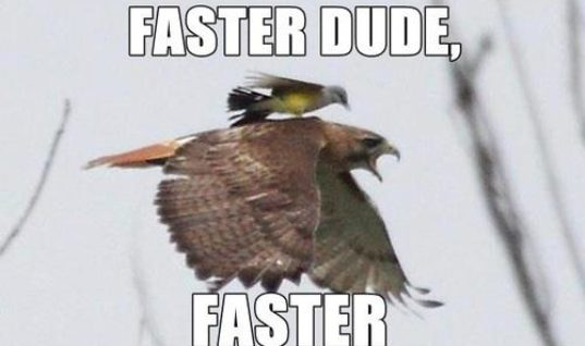 Go Faster Dude