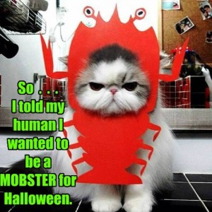 Halloween outlook for pet cat