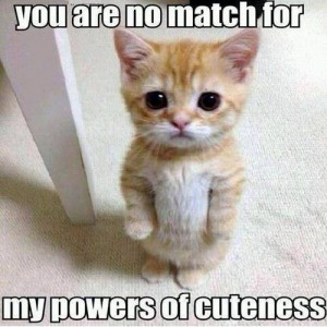 Power of Cuteness