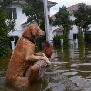 Saving a pet in Tsunami