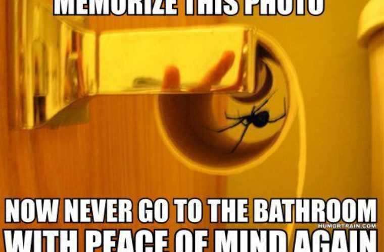 Scared of Spiders 760x500 scared of spiders funny pictures, quotes, memes, funny images