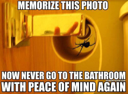 Funny Spider Meme : Scared of spiders funny pictures quotes memes