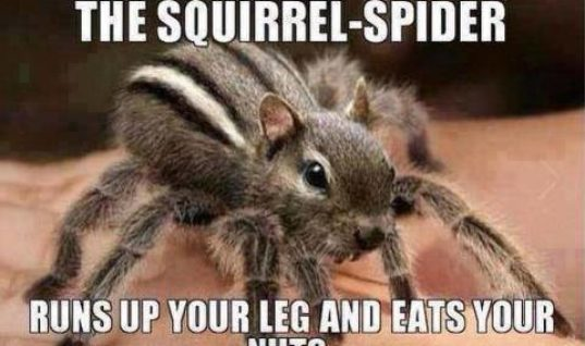 Squirrel Spider