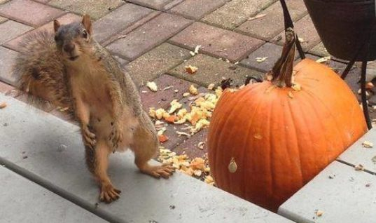 Who broke the Pumpkin?