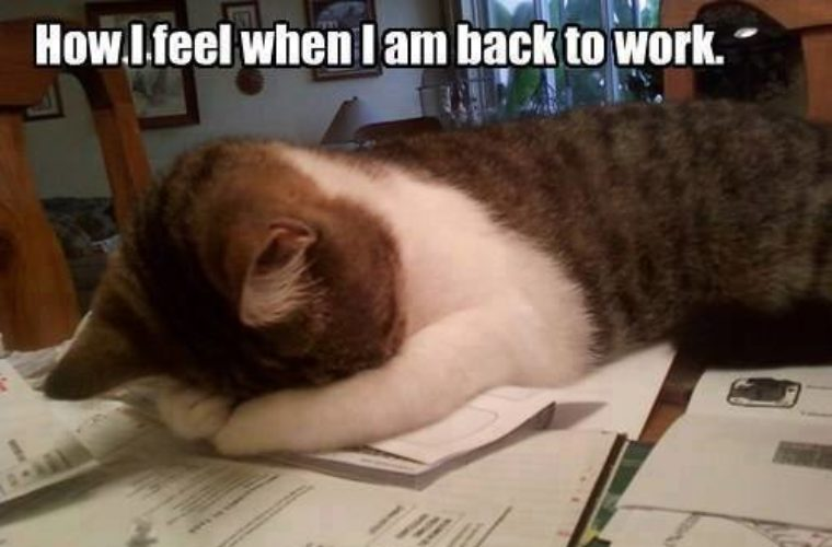 Back To Work : Back to work funny pictures quotes memes funny images funny