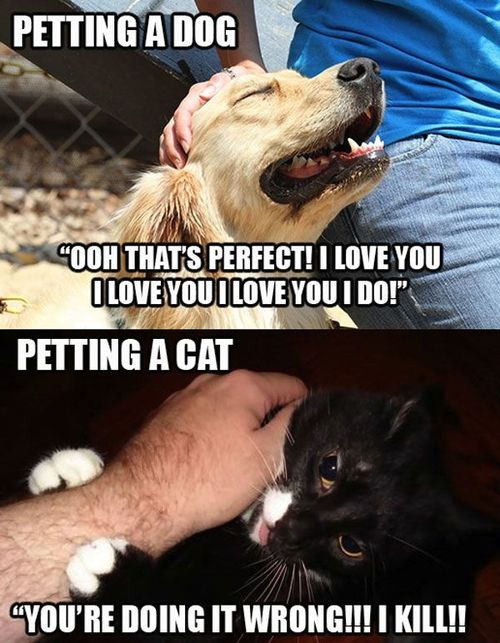 Cat VS DOG | Funny Pictures, Quotes, Memes, Funny Images ...
