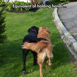 Even Dogs can shake hands