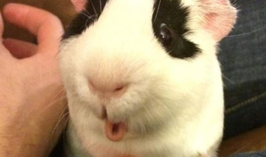 Ohhh A Carrot
