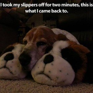 Puppy head Slippers