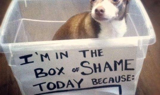 The box of the shame