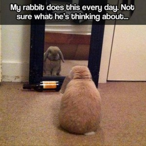 Thinking Rabbit