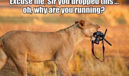 Wildlife Photographer runs away