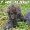 Missing the alarm