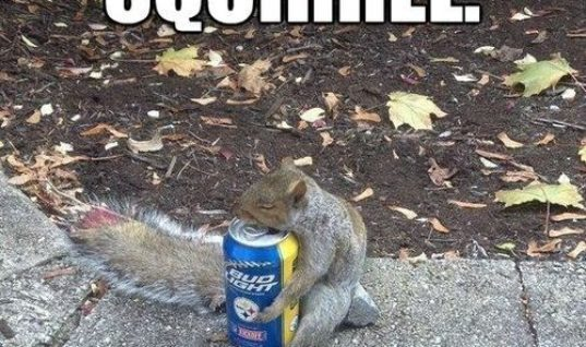 The squirrel knows whats up