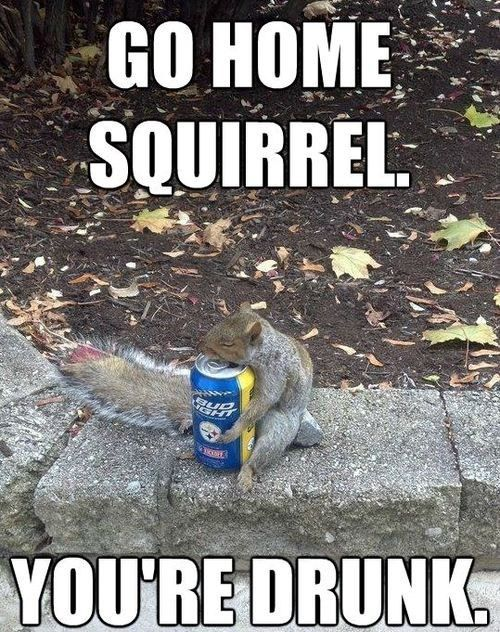 The_squirrel_knows_whats_up_20140213_Thesquirrelknowswhatsup the squirrel knows whats up funny pictures, quotes, memes, jokes,Squirrel Birthday Meme