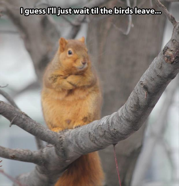 Waiting till the birds leave