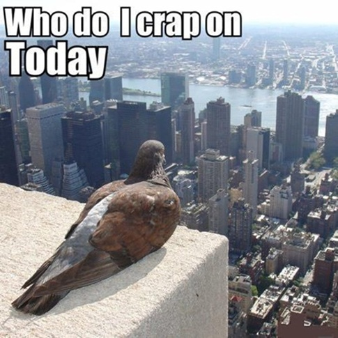 This is what birds think everyday