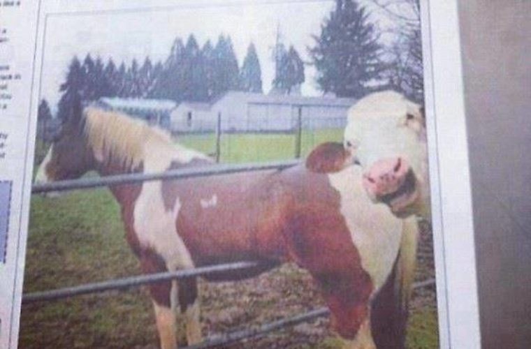 Horse stuck in fence