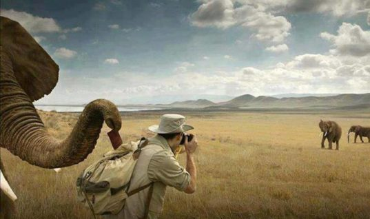 Sacrifices of wildlife photography