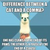 Difference Between A Cat And A Coma