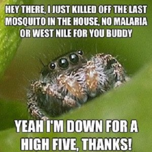 Help From A Spider