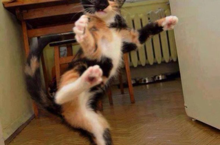 Karate Cat Kick