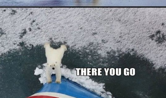 Polar Bear Helps Peoples