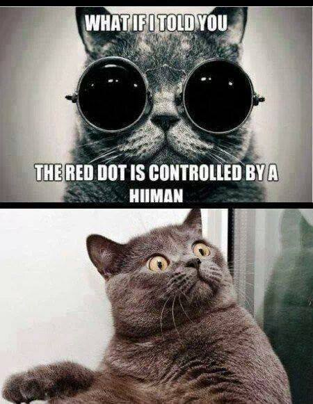 Cats Are Great Meme