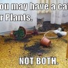Cat or Plants