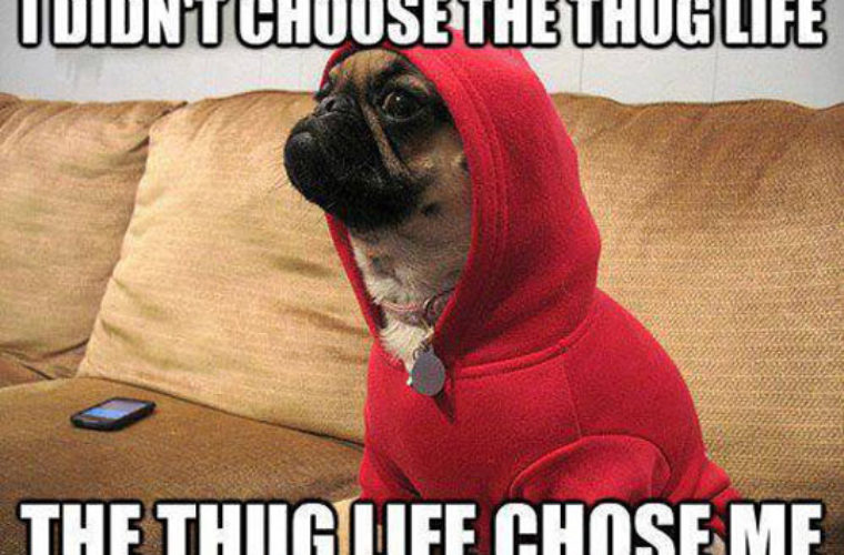 Funny Meme Life : Doggy thug life funny pictures quotes memes funny images