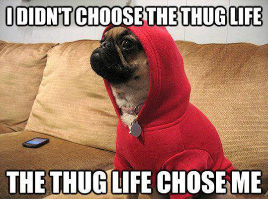Funny Memes Thug Life : Doggy thug life funny pictures quotes memes