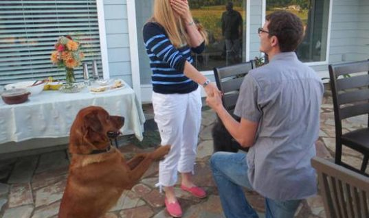 Doggy proposal