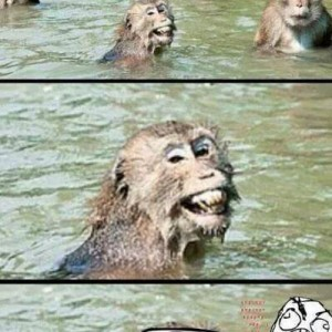 I know what you did there naughty monkey