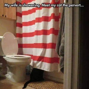 My pervert cat