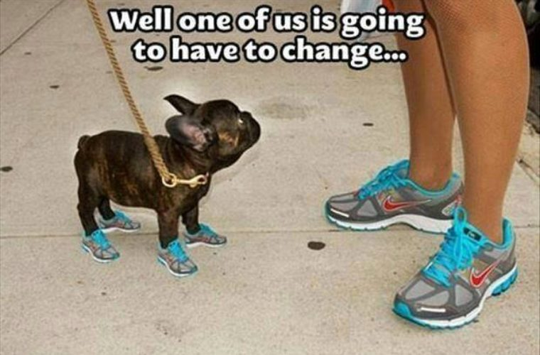 Nike Shoes Doggy