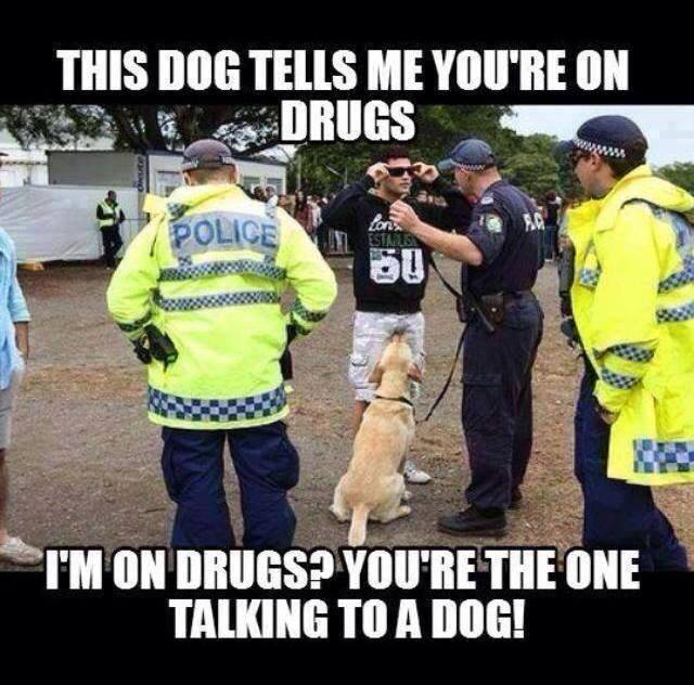 You Re Amazing Dog: The Dog Tells Me You Are On Drugs