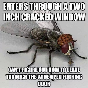 They are Flies