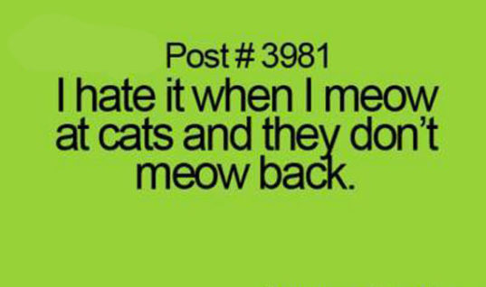 When I meow at cats