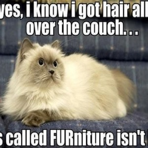 Furniture Meme