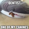 I Need To See A Dentist