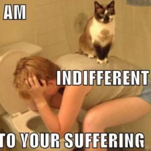 Indifferent Cat