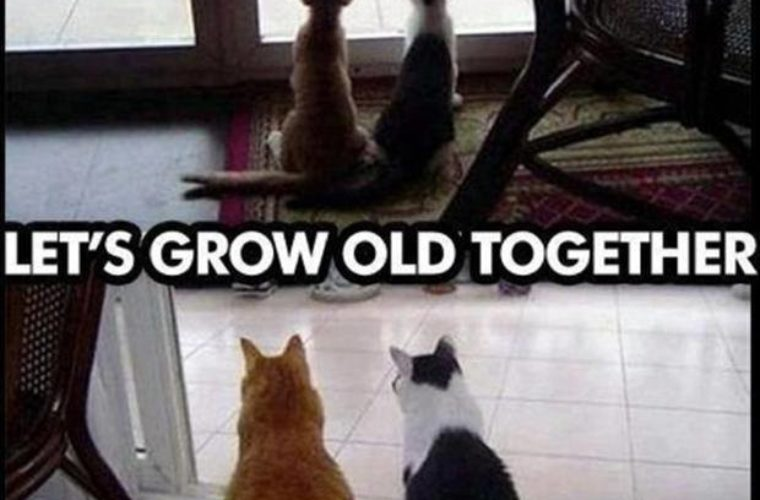 Getting Old Together Quotes: Funny Pictures, Quotes, Memes