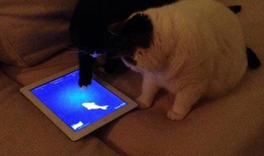 Now Cats catch fish on iPad